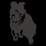 DOG IMAGE2
